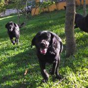 Adestramento adestrador de cães em Campo Grande MS